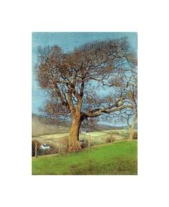 Oak, near Pen-y-Berth - © Alan Percy Walker